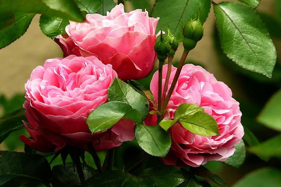 Microrganismi Effettivi per la cura dei fiori