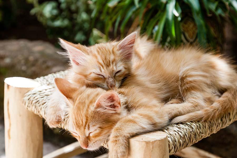 Microrganismi Effettivi per la cura del gatto
