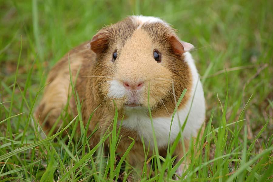 Microrganismi Effettivi per la cura degli animali domestici