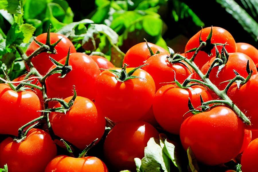 Microrganismi Effettivi per la cura della verdura