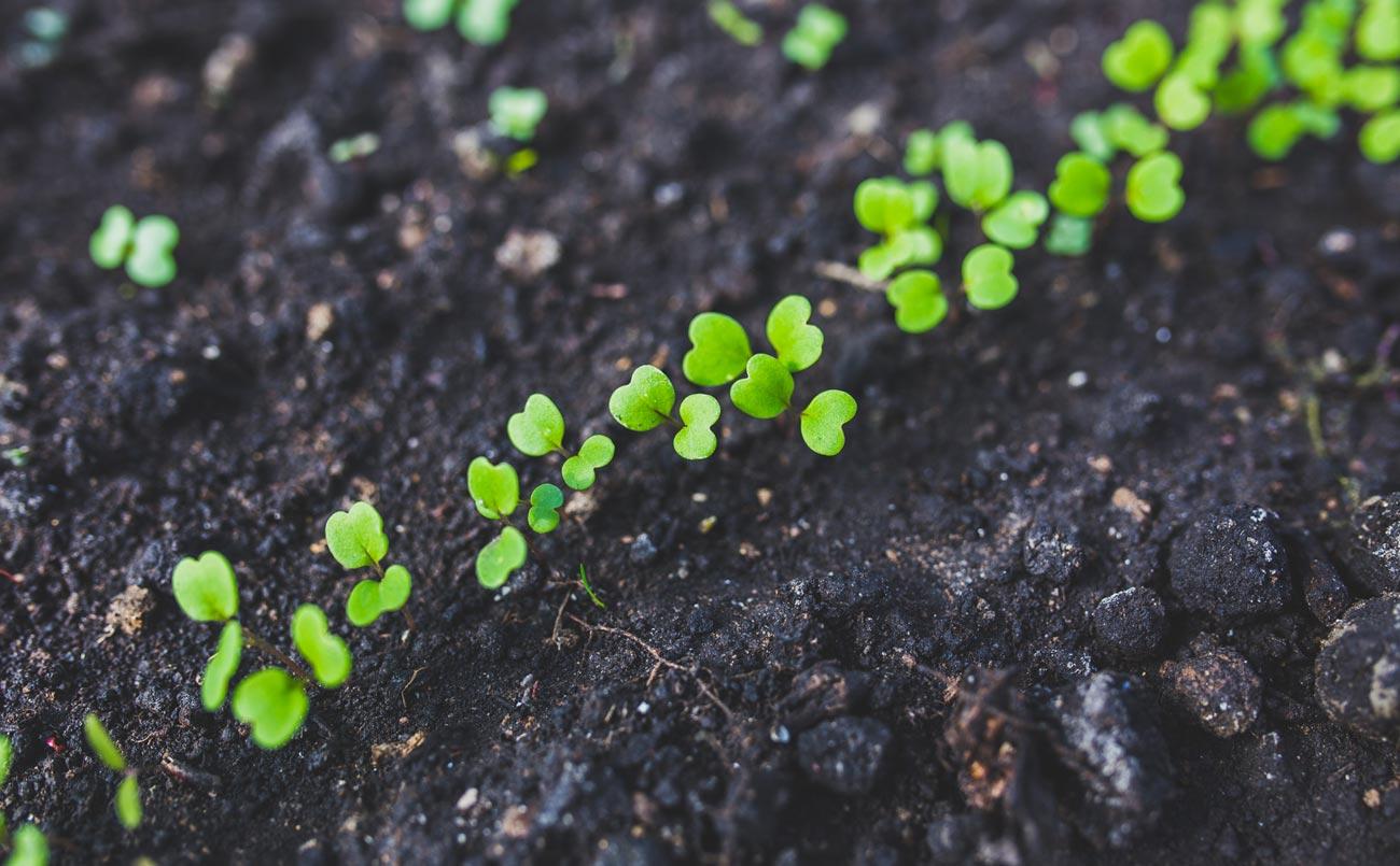 Microrganismi Effettivi Sementi